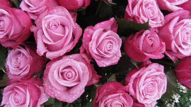 Rózsa (esküvőkor): Boldog szerelem. A rózsa, a szerelem virága. Egy szál rózsát ajándékozni az egyértelmű szerelem jelképe, míg rózsát csokorban adni az áhított szerelemé, száz szál rózsát ajándékozni pedig a mindent felperzselő, olthatatlan vágyódás jelkép. A rózsa számos szimbólumot hordoz magában. De mindegyikben közös, hogy valamilyen módon a tiszta, bűntelen élethez kötődik, hiszen többek között a szépség, a szerelem, a mulandóság, a jó szerencse, a boldogság és a csend szimbóluma ez a virág. A legrégebbi ismert ábrázolása 3500 éves, az ókori görög knósszoszi palota egyik freskóján található. Mindezek mellett a rózsa a parfümkészítés egyik legfontosabb alapillata is. A rendkívül széles választék pedig azt jelenti, hogy minden alkalomhoz van megfelelő belőle.   Rózsa (rózsaszín) – Tökéletes boldogság; Kérlek, higgy nekem…. megbocsátás