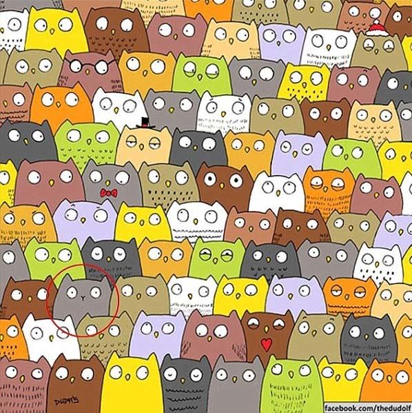 Baglyok és a macska - megoldás