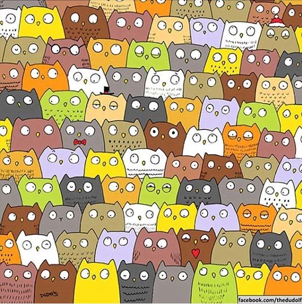 Baglyok és a macska
