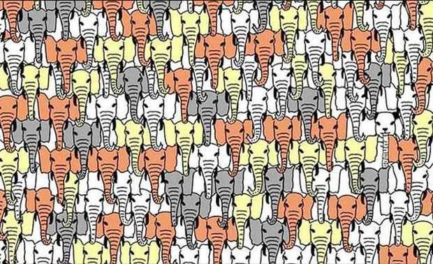 Elefántok és a panda1