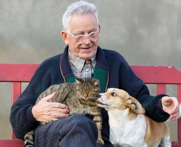 Idős férfi kutyával és macskával