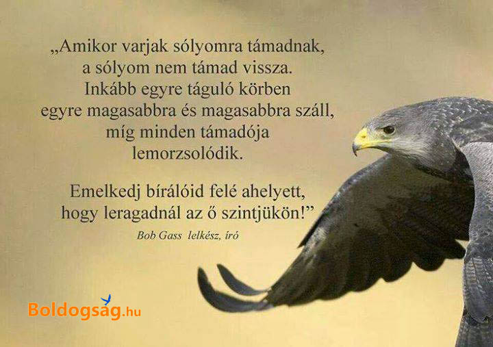 varjak_es_a_solyom